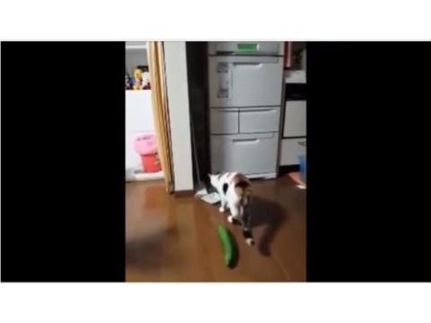 Salatadan korkan kediler :) gülme garantili