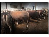 Gezer Çiftliği Marmaraereğlisi
